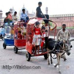 Donkey Train in Pakistan