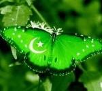 Mazar-e-Quaid Event (10)