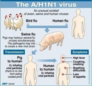 Swine_Flu_Symptoms